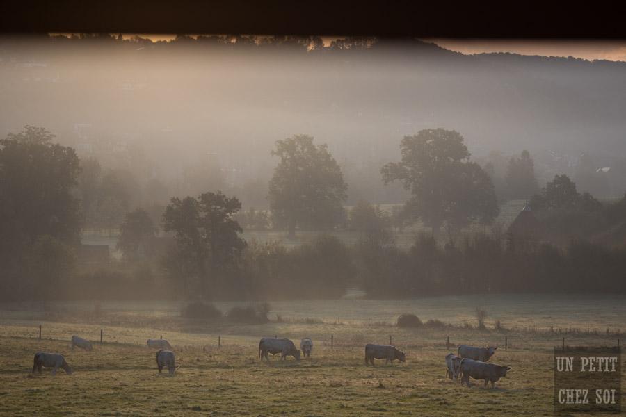 france, region normandie, calvados, pays d'auge, colinnes avec vaches près de pont l'évèque,